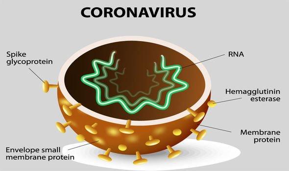 coronavirus composition